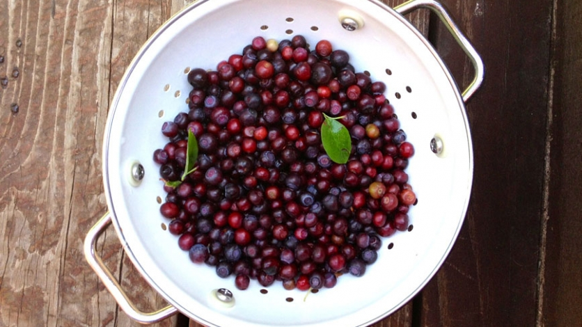 freshly strained huckleberries