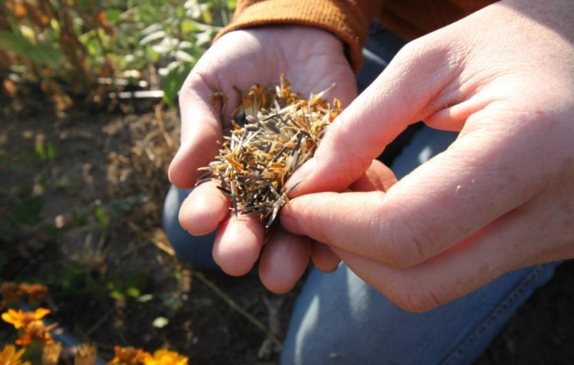 Snake River Seeds Cooperative Boise Idaho
