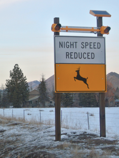 Watch Out for Deer!