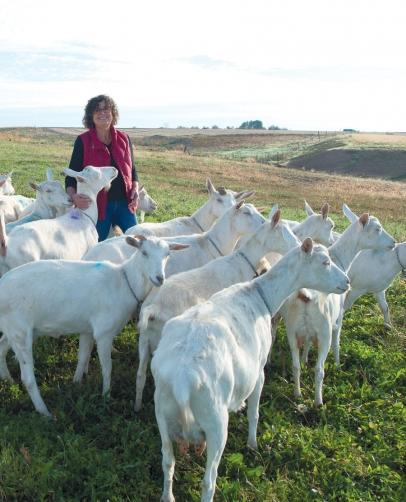 Karen Evans and sheep
