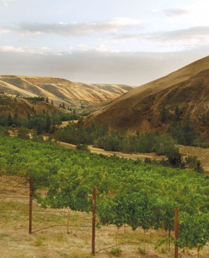 Colter's Creek Vineyard