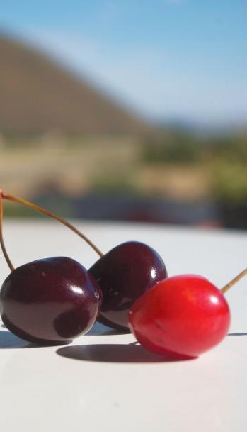 Idaho Cherries