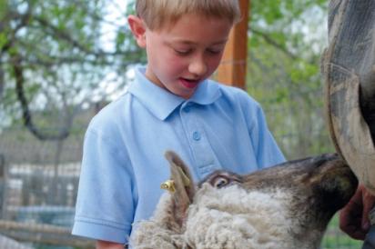Feeding farm animals