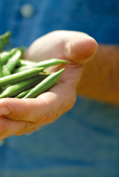 Holding snap peas