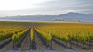 Vineyards in Idaho run by women.